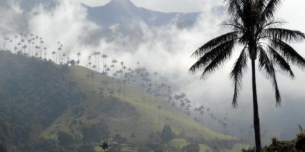 valle de cocora y palma de cera